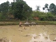 Cấp đất cho đồng bào dân tộc thiểu số - nhìn từ Đắk Lắk