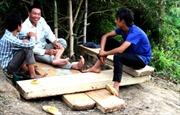 Vấn nạn khai thác gỗ lậu ở rừng Hoàng Liên