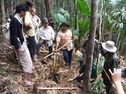 Dân đổ xô phá rừng tìm trầm ở Phú Yên