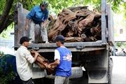 Giữ ôtô chở 2,5 tấn gỗ Ngọc Am quý hiếm