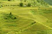 Vẻ đẹp ruộng bậc thang Yên Bái