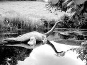 Quái vật hồ Loch Ness - Kho chuyện không bao giờ kể hết (2)