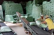Xây dựng thương hiệu cho gạo xuất khẩu