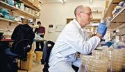 Phát hiện protein diệt khuẩn có thể thay thế kháng sinh