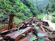 Ngăn chặn 'xẻ thịt' rừng gỗ ở Lai Châu