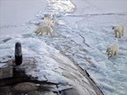Bắc cực sẽ là tâm điểm cạnh tranh giữa các cường quốc?