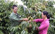 Cà phê hướng tới phát triển bền vững