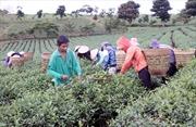 Rót vốn cho nông nghiệp công nghệ cao