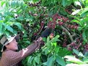 Đẩy mạnh phát triển kinh tế trang trại