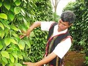 Đổi thay nhờ chuyển đổi cây trồng vật nuôi