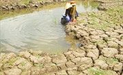 40% diện tích ĐBSCL có thể bị nhấn chìm do biến đổi khí hậu