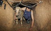 Ai Cập phá hủy 60 đường hầm dọc biên giới Gaza