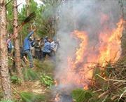 Bắc Giang: Liên tiếp cháy rừng ở huyện Yên Dũng