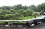Xây dựng bãi xe ngầm tại công viên Thống Nhất phải theo quy hoạch