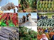 Kim ngạch xuất khẩu nông sản giảm gần 14%