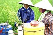 Sử dụng thuốc bảo vệ thực vật tùy tiện, tràn lan