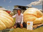 Quả bí ngô nặng nhất Australia