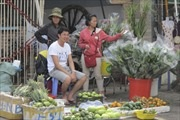 TP Hồ Chí Minh: 'Nóng' thị trường hoa quả trưng Tết