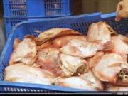 Phát hiện thịt cá hôi thối tuồn vào bếp ăn trường học