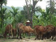 Làm giàu từ chăn nuôi và trồng rừng