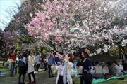 Nhiều đoàn khách hủy tour đi Hàn Quốc, Nhật Bản đến hết tháng 4
