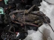 Khởi tố 2 đối tượng sát hại voọc quý hiếm tại Phong Nha-Kẻ Bàng