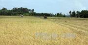 Nghị định về quản lý, sử dụng đất trồng lúa