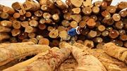Hậu quả của nạn phá rừng ở Malaysia