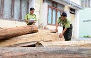 Kỷ luật Hạt trưởng kiểm lâm mua gỗ trái phép