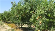 Tái cơ cấu nông nghiệp: Bài học từ Israel - Bài cuối