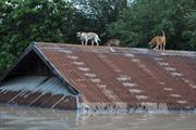 Hơn 100 người thiệt mạng do lũ lụt, lở đất tại Ấn Độ