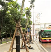Thay thế cây xanh trên đường Nguyễn Chí Thanh