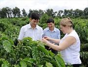 Nestlé hỗ trợ Việt Nam phát triển công nghiệp cà phê