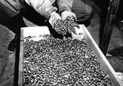 Phát hiện tàu chở vàng mất tích của phát xít Đức?