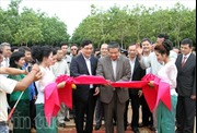 Doanh nghiệp cao su Việt hoạt động hiệu quả tại Campuchia