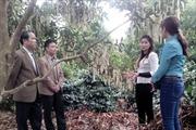 Tiềm năng phát triển cây mắc ca ở Sơn La