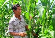 Hỗ trợ nông dân Khmer thoát nghèo