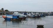 800 tàu cá Khánh Hòa rời vùng ảnh hưởng của bão