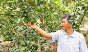 Phát triển cây trồng bền vững: Liên kết đẩy mạnh xây dựng cánh đồng lớn