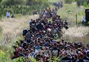 Số người di cư đến Hungary lập kỷ lục hơn 10.000 người/ngày
