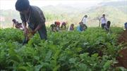 Nghị định 74 hết hiệu lực: Nỗi lo của học sinh nghèo Lào Cai