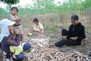 Ngăn chặn phá rừng trồng sắn