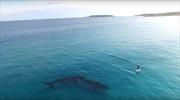 Lướt ván SUP cùng cá voi ở Australia