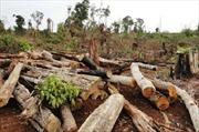 Đắk Nông: Nạn phá rừng tăng đột biến