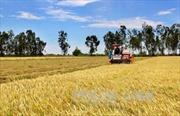Ukraine sẵn sàng thúc đẩy hợp tác nông nghiệp với Việt Nam