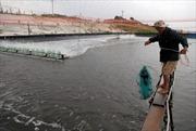 Gỡ khó cho sản xuất giống thủy sản