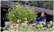 Cao nguyên đá - ngàn hoa khoe sắc