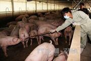 Phát hiện hành vi mới tuồn chất cấm vào chăn nuôi