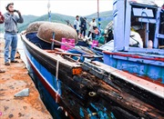 Lai dắt tàu cá cùng 10 ngư dân bị tàu lạ đâm về đất liền an toàn