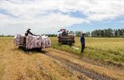"""Cuộc """"cách mạng xanh"""" trong nông nghiệp"""